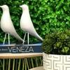 Imagem de Pássaro com Pé Branco - 14x18cm