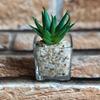 Imagem de Suculenta Artificial Vaso Vidro - 9cm