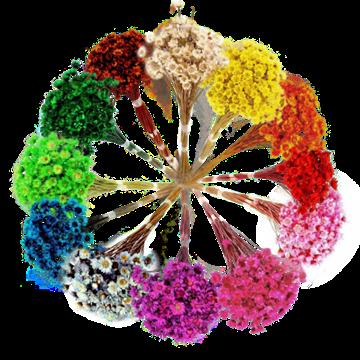 Imagem de Sempre Viva Bouquet